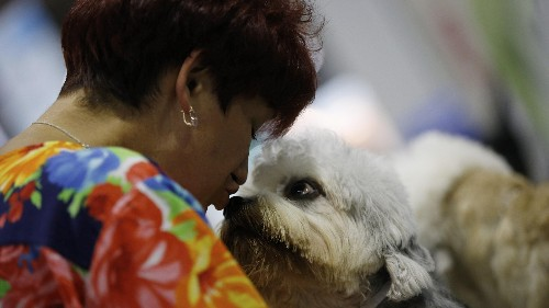 Your stress is hurting your dog, according to a new study