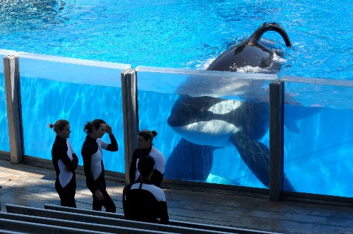 """The """"Blackfish effect"""" is over for SeaWorld—for now"""