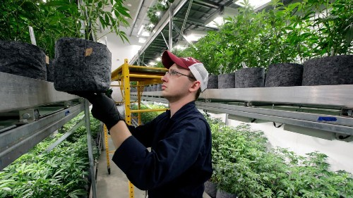 Marijuana is going corporate, and the government isn't ready