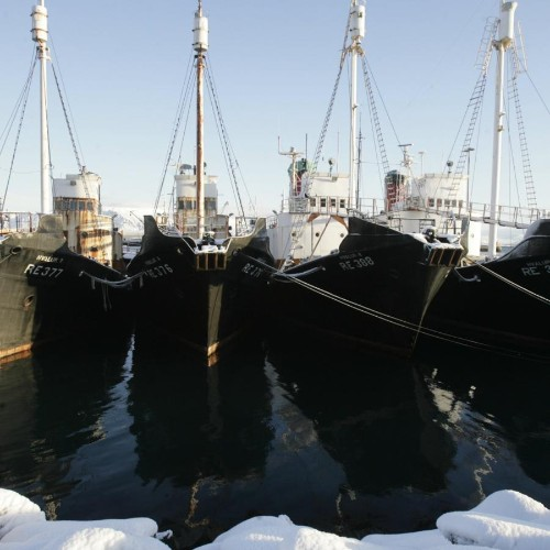 Tourism officials are worried about Iceland's whaling