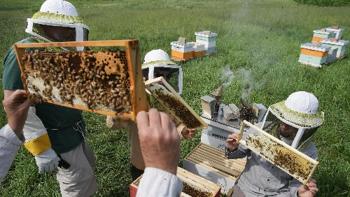 Bees are the second most lethal animals in America