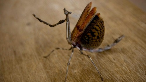 Insects may be able to feel fear, anger and empathy, after all
