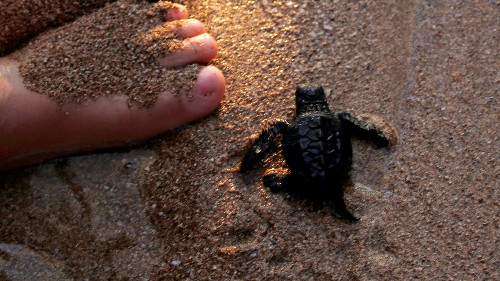 There's good news for endangered sea turtles and marine mammals