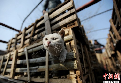 Activists in China just saved 2,800 cats from ending up on the dinner table
