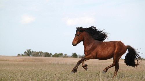 Wild horses can't be an endangered species, says the US Fish and Wildlife Service