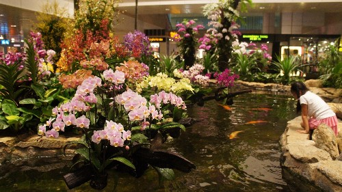 The world's best airport has a horticulture team, a butterfly garden, and 500,000 plants