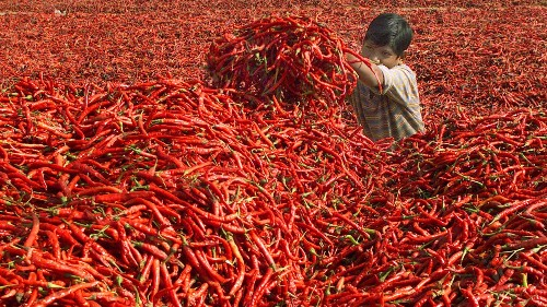 The highly unusual company behind Sriracha, the world's coolest hot sauce