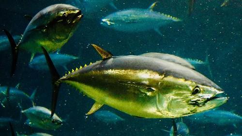 StarKist fined statutory max $100 million for tuna price fixing