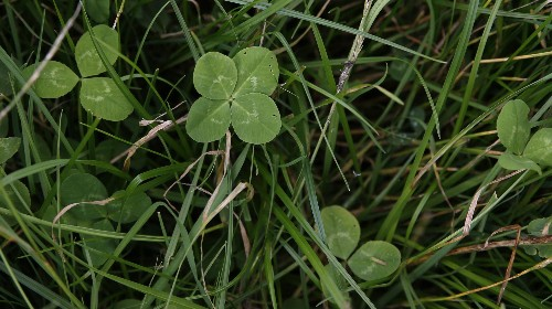 It's time for us to admit that whether or not we succeed in life is mostly about luck
