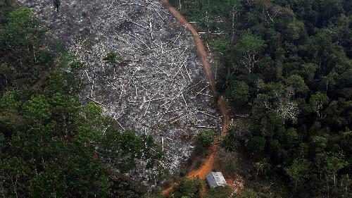 Brazil's Bolsonaro can't hide Amazon deforestation from satellites