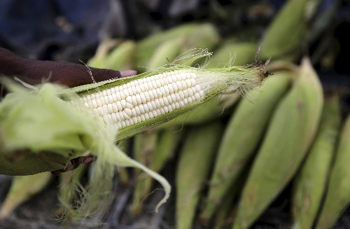 South Africa's best crop in history still isn't enough to lift its farmers' spirits