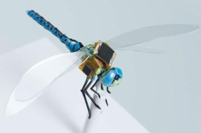 Scientists attached an electronic backpack to a genetically modified dragonfly and turned it into a drone