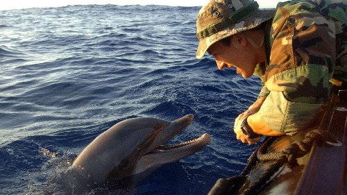The US navy is retraining its mine-hunting dolphins to help save an elusive, endangered species