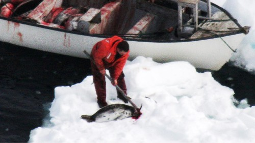 Canada can't force the EU to buy its murdered baby seals
