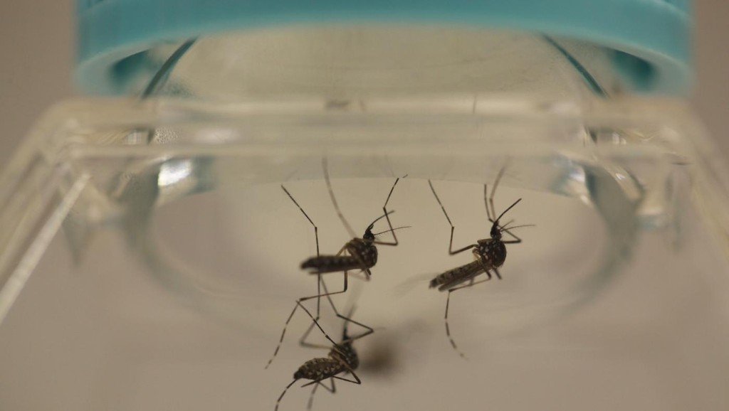 """A Chinese """"mosquito factory"""" releases 20 million of the little buggers into the wild every week"""