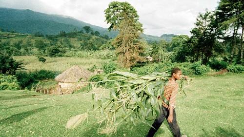 Innovators and entrepreneurs will unlock Africa's agribusiness promise