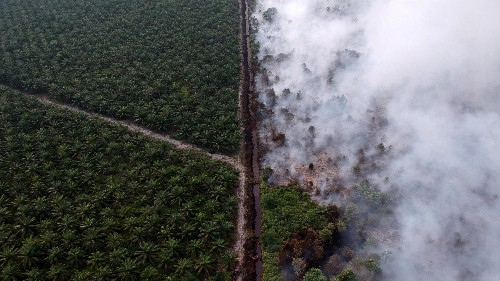 The global demand for palm oil is driving the fires in Indonesia