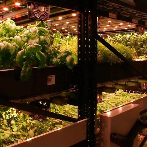 This Manhattan vertical farm grows edible herbs and flowers in a basement