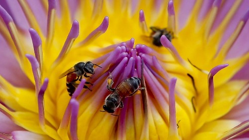Scientists made drones that can pollinate plants so bees don't have to