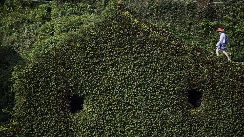 Photos: An abandoned Chinese village has been reclaimed by nature