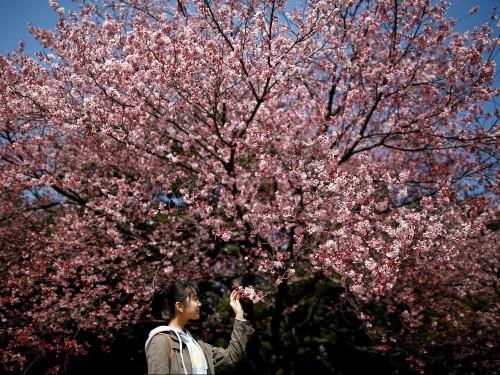 Peak Japan: Why Japan is so resistant to change even as disaster looms
