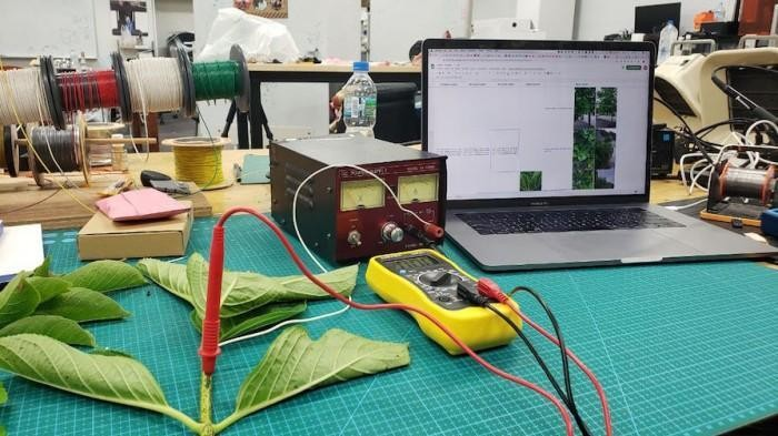 Researchers are sitting on tech that could transform trees into power generators