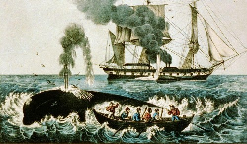 Why Harvard Business School teaches students about whaling