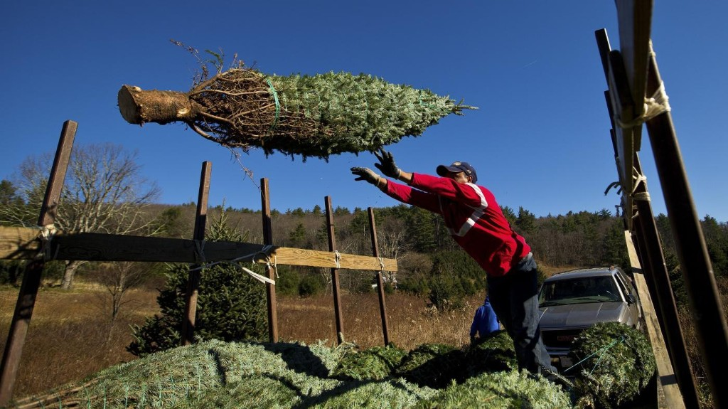 Climate change is making Christmas tree shopping harder than ever
