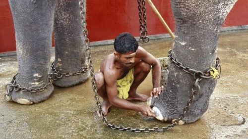 As India celebrates the festival of Ganesh, spare a thought for the 15,000 Asian elephants still in captivity