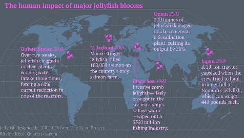 Jellyfish are taking over the seas, and it might be too late to stop them