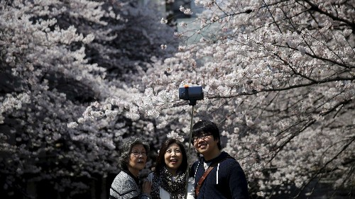 Photos: This year's cherry blossom season in Japan will be beautiful, and especially lucrative