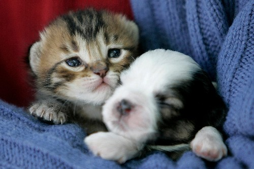Thanks to Lucy's Law, England will ban puppy and kitten sales in pet shops