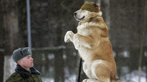 Dogs have a similar kind of memory to the one that gives humans their sense of self
