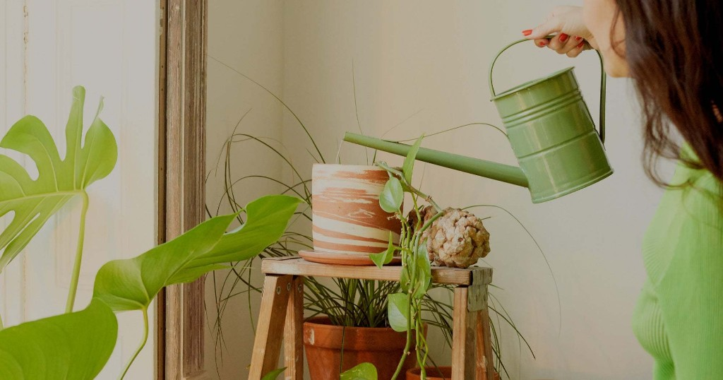 7 Places To Buy Plants Online To Suit Every Budget