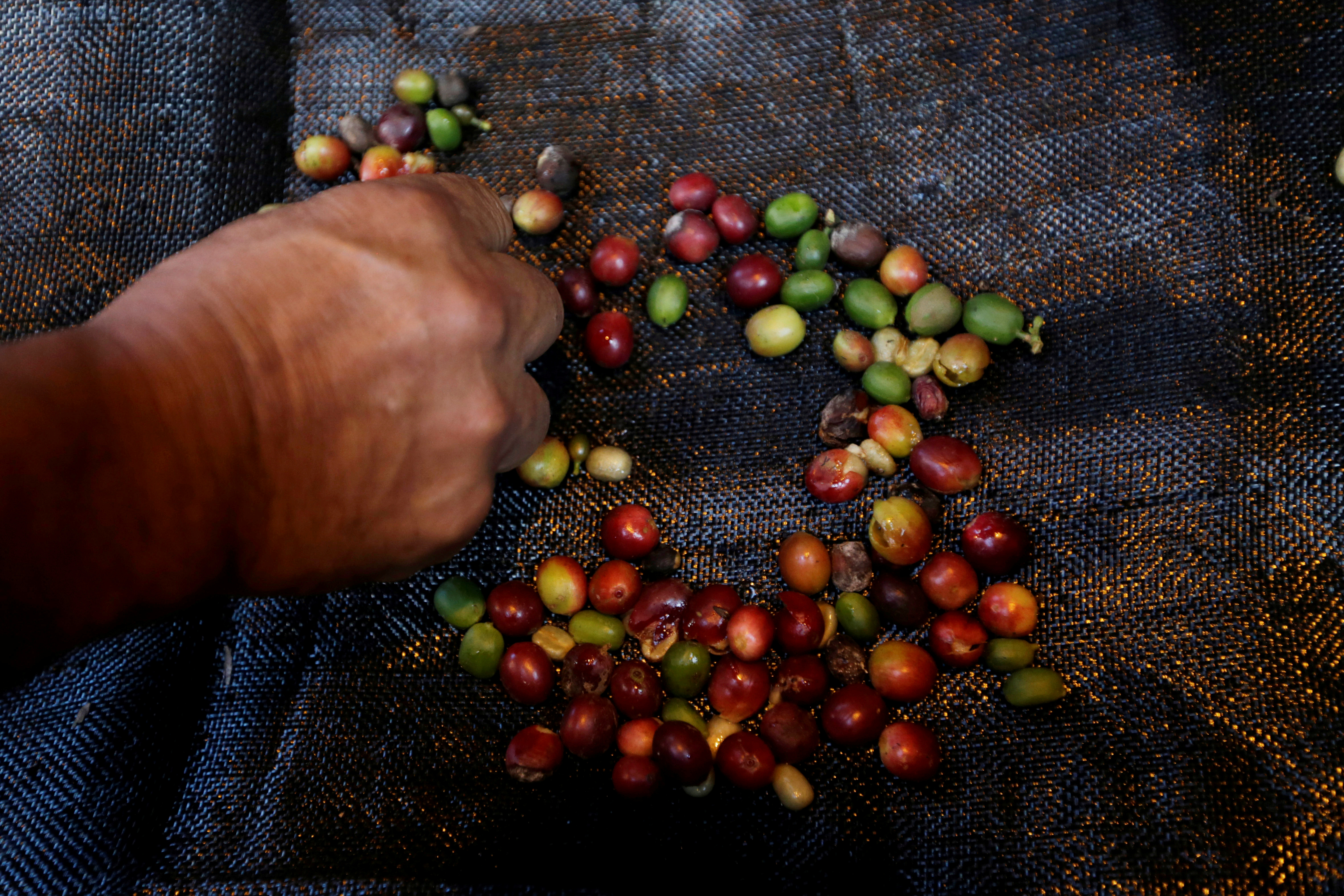 Colombian proposal to ditch NY coffee price may send buyers elsewhere