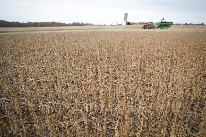 Column: Funds' bullish view in CBOT soybeans approaching 2012 record