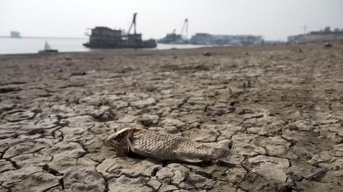 'No food': China's biggest freshwater lake dries up | Reuters Video