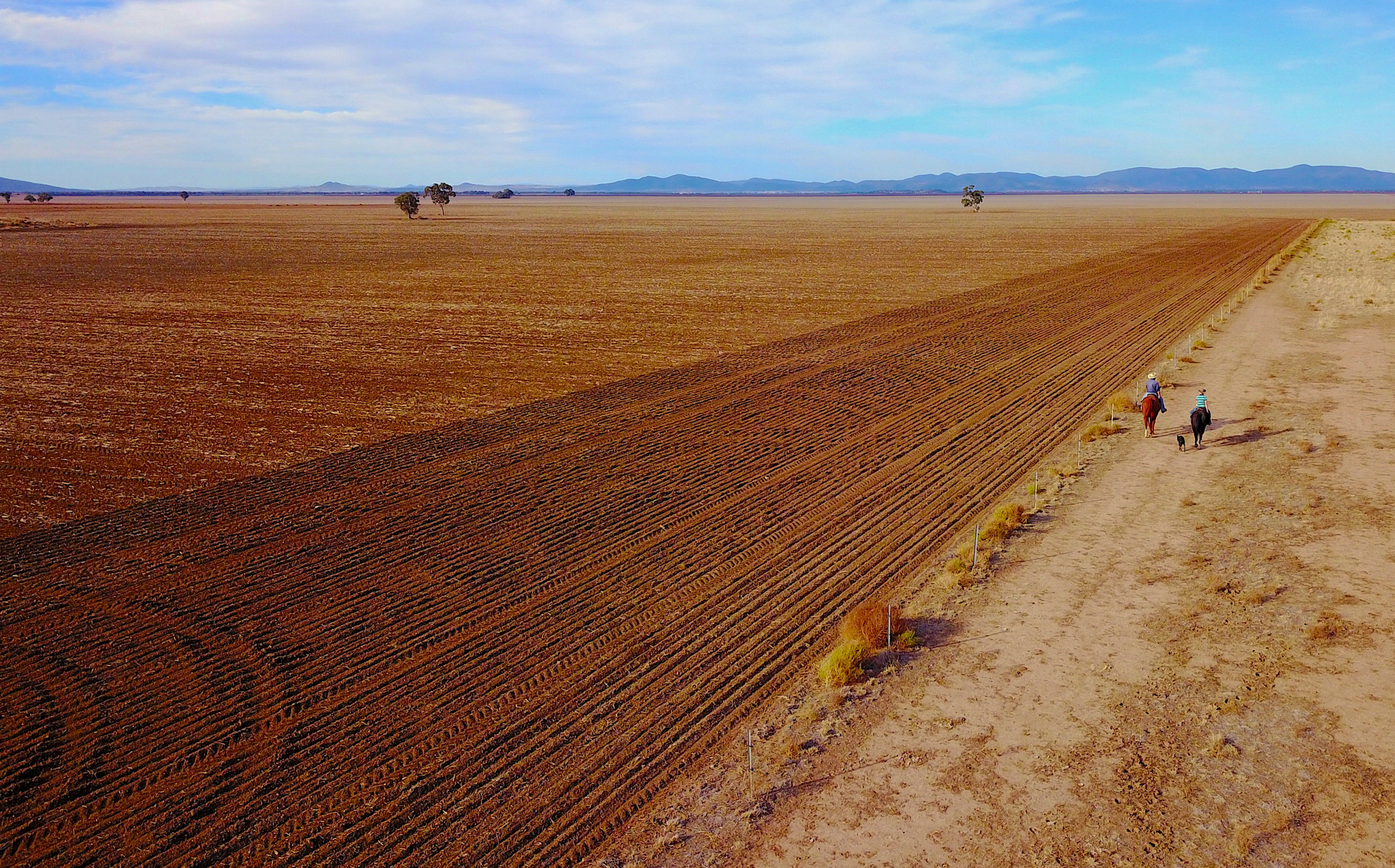 Drought to cut east Australia crop output in half from 20-year average