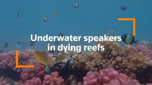 How underwater speakers could help revive dying coral reefs   Reuters Video