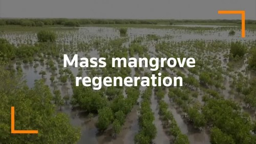 How a man's passion for nature saved Senegal's mangroves | Reuters Video