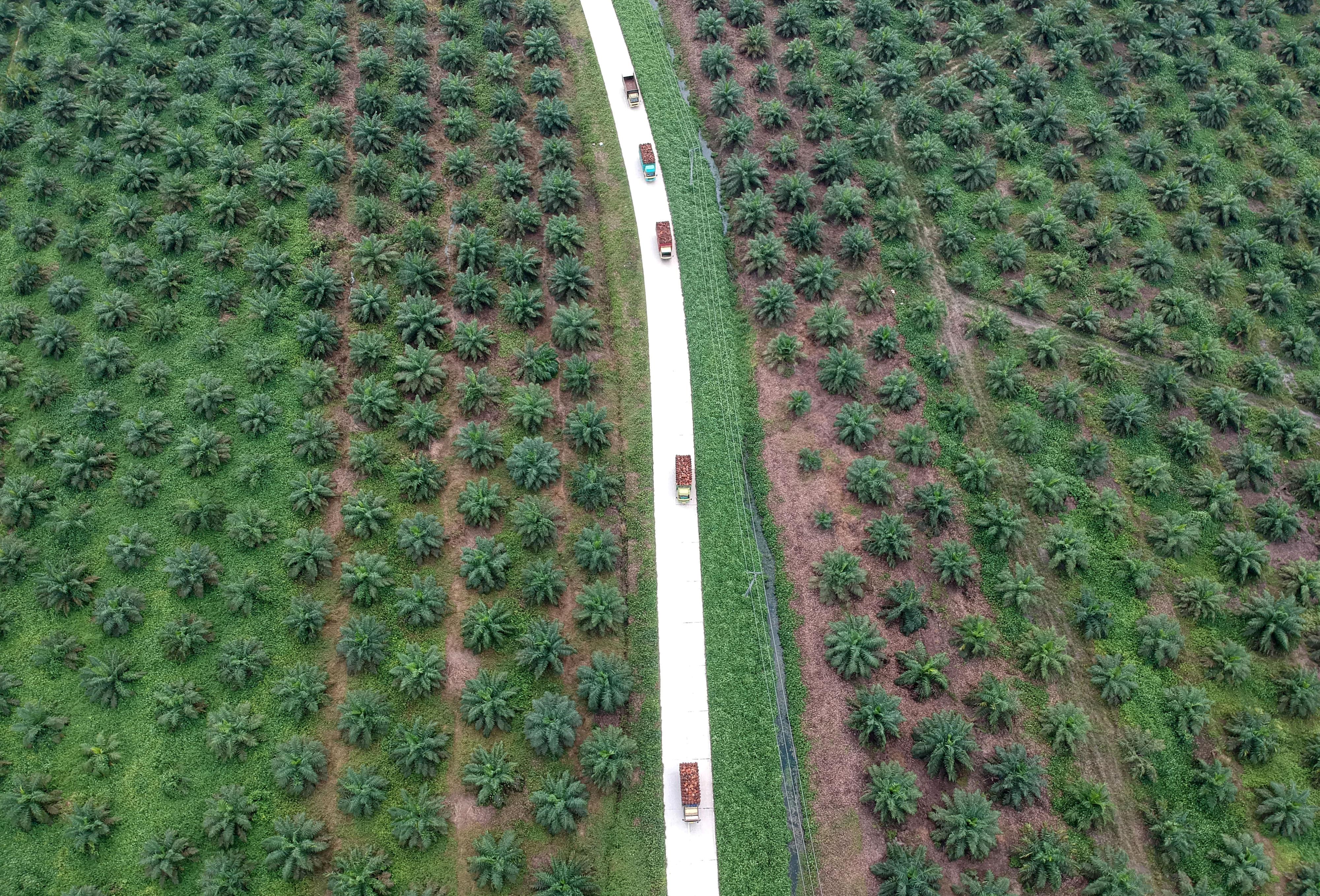 Palm retreats on weaker overnight soyoil