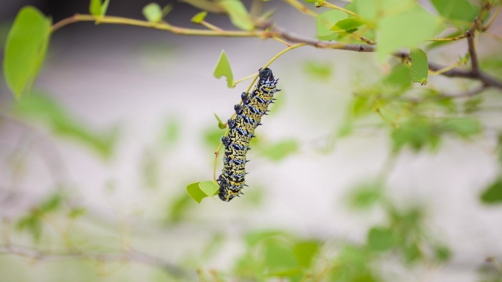 Caterpillars are GOOD for you: leading Zim scientist says delicacy boosts nutrition