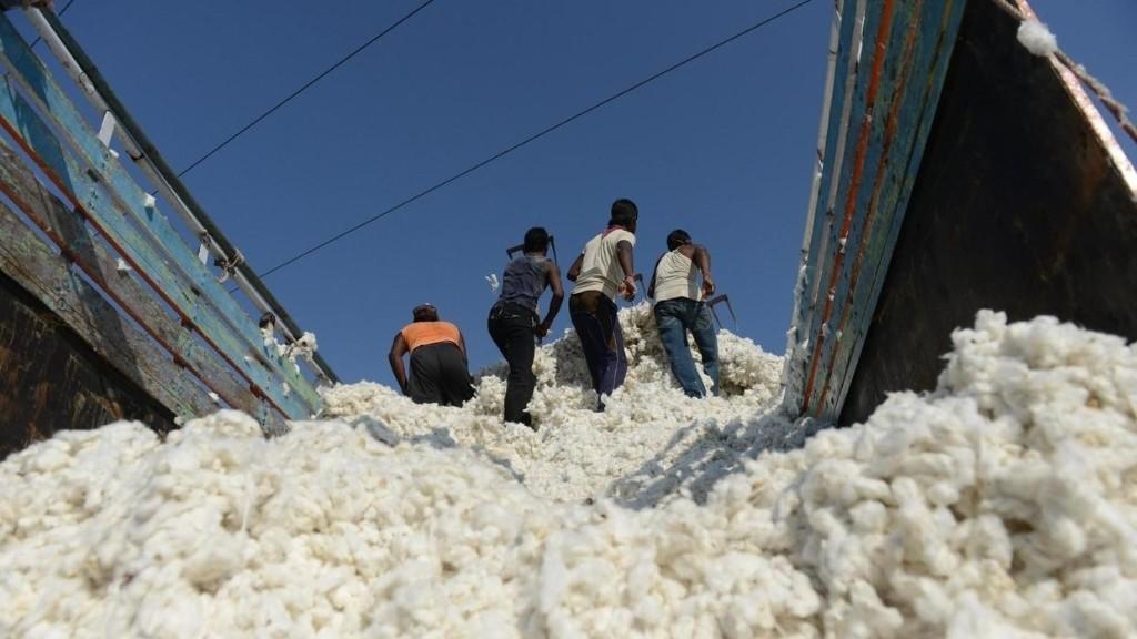Chronique des matières premières - Inde: les criquets menacent la prochaine récolte de coton