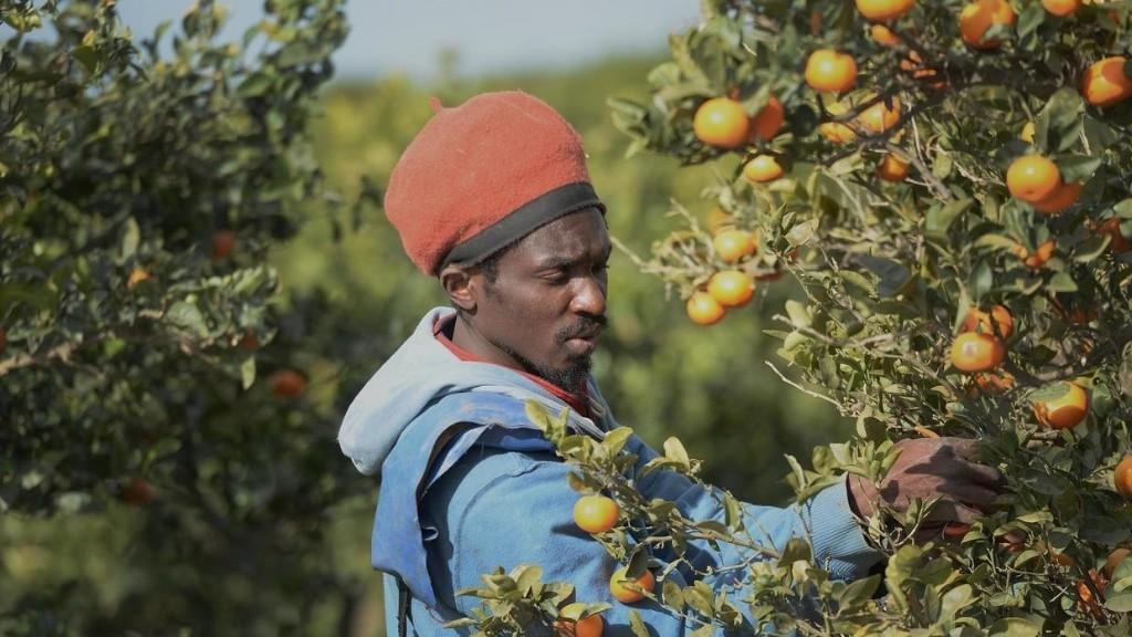 Espagne: le traitement des travailleurs migrants et saisonniers fait polémique