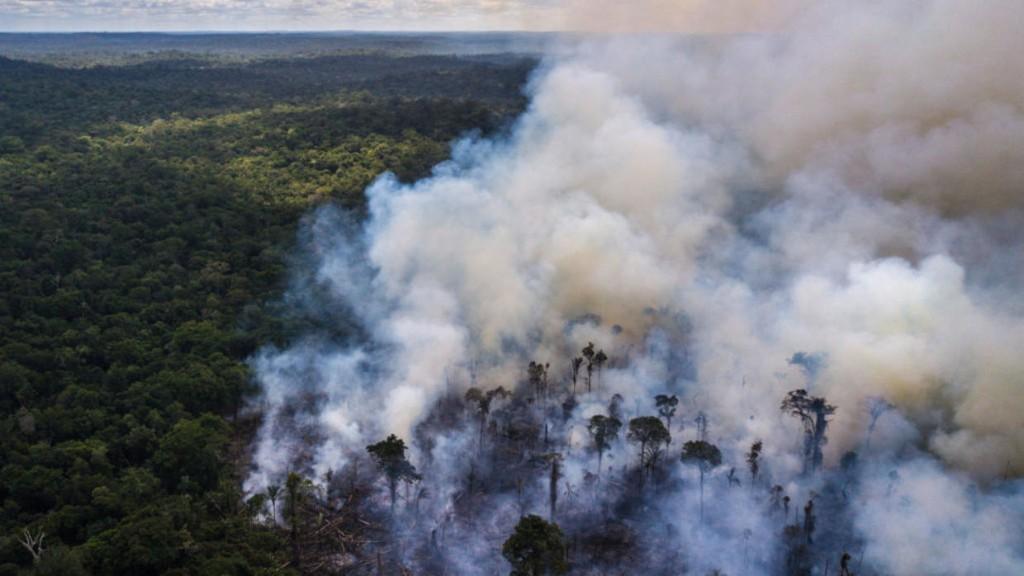 Journée de l'environnement: «La crise doit être un moteur pour la protection de la biodiversité»