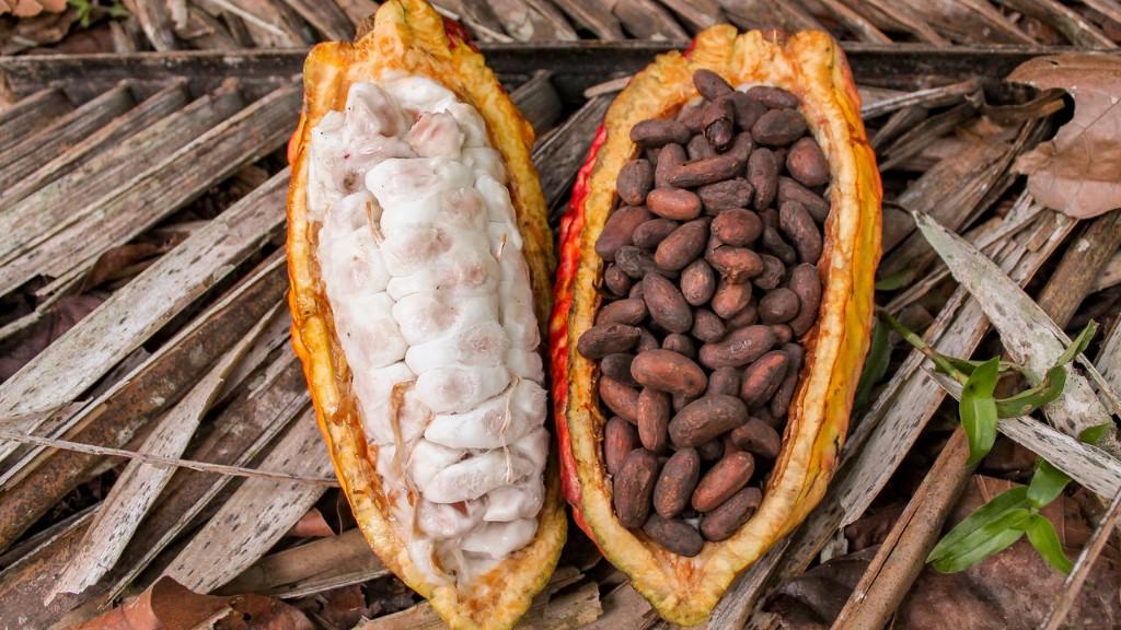 Cacao: la Côte d'Ivoire et le Ghana s'insurgent contre deux chocolatiers américains