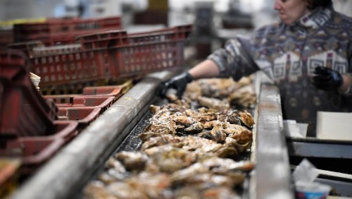 Raw sewage gave Brittany oysters vomiting bug, say angry farmers