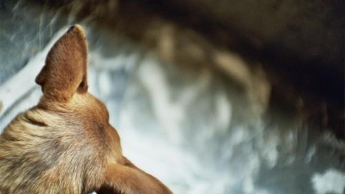 COVID19: ¿Y los animales abandonados qué?