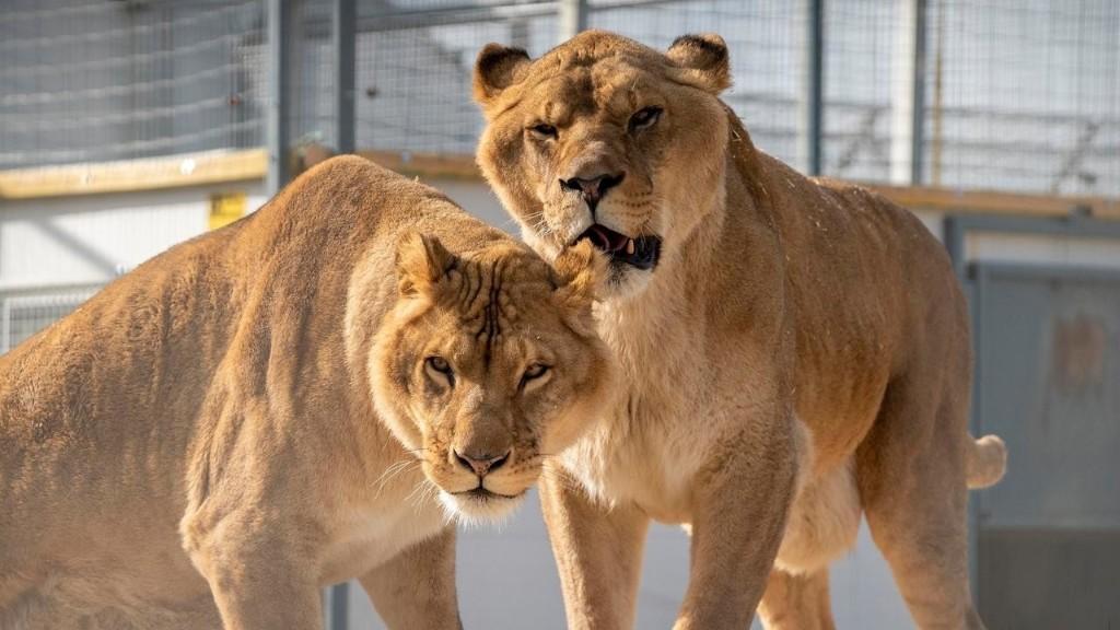 Francia hoy - 'La Tanière', el refugio que rescata a los animales de circos y laboratorios