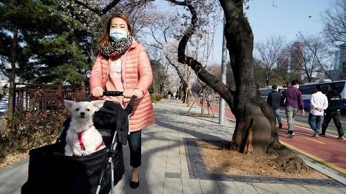 La Corée du Sud distribue 3,65 millions de masques aux travailleurs les plus exposés